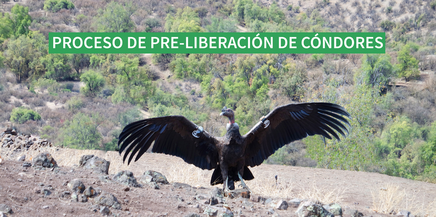 condorWEB